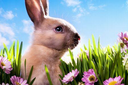 Wunderbares Osternest